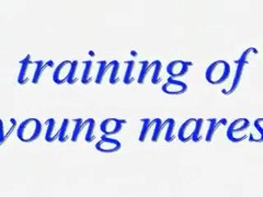 training of young mares