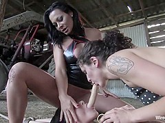 Sandra's Farm: Princess Donna Called in to Assist!