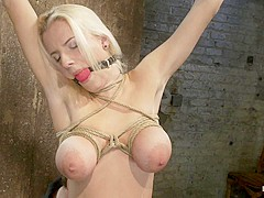 Hot 19yr Blond With Huge Natural F Breaststhis Is Her First Ever Hardcore Bondage Shoot. - HogTied