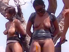 Africansexslaves-1-9-217-stutendressur-in-der-savanne-4-1
